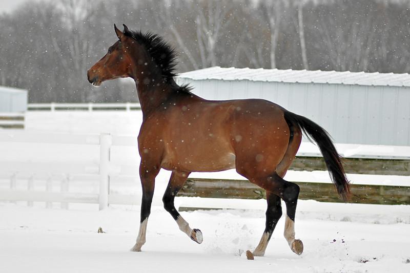 Snowy Dalanta 051 RETOUCHED.jpg
