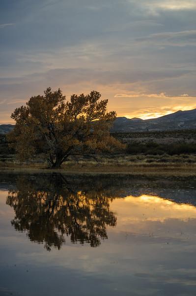 20111124 Bosque del Apache 411.jpg