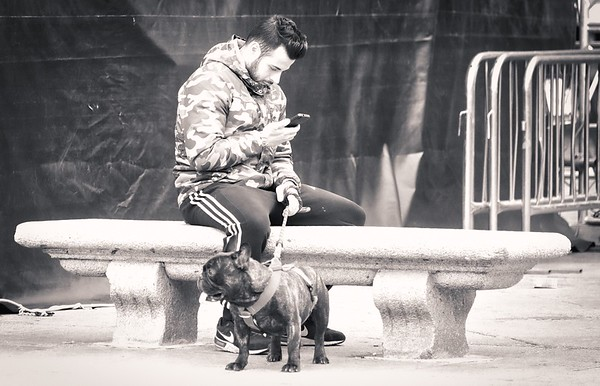 Street dogs and their owners