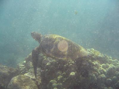 Maui 2007 Underwater