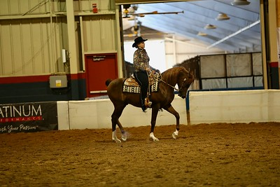 53 204 Arabian Western Pleasure  Junior Horse