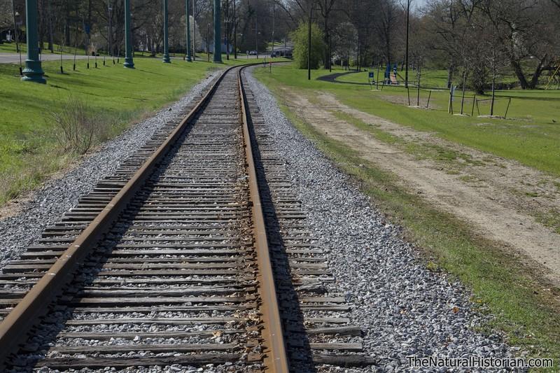 Killdeer-sitting-on-nest-railroad-tracks3-Canton.jpg