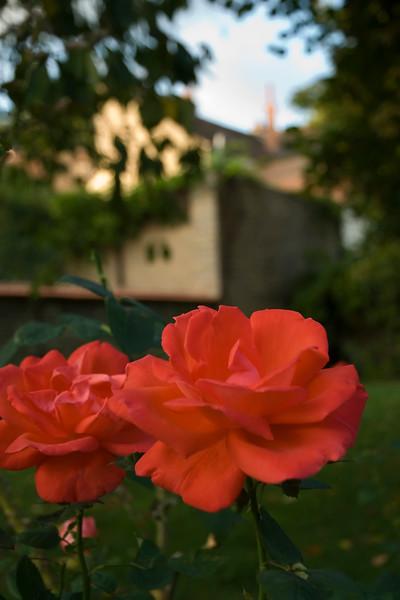 beaune rose.jpg