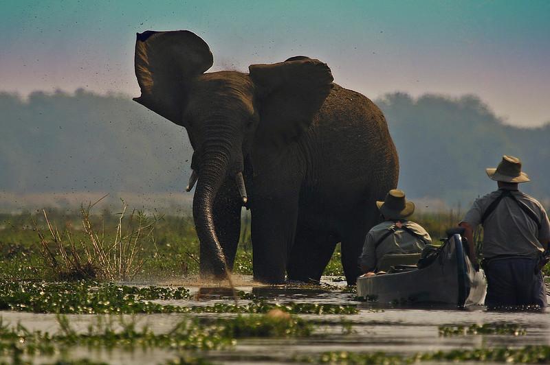 ZAMBEZI ELEPHANT-NICK & WILLIAM copyZIMBABWEZAMBEZI ELEPHANT-NICK & WILLIAM copy (2).jpg