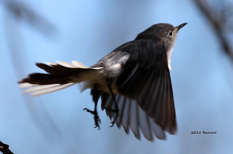 bird 3-6-15 155.jpg