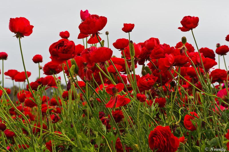 130428_046_FlowerField.jpg