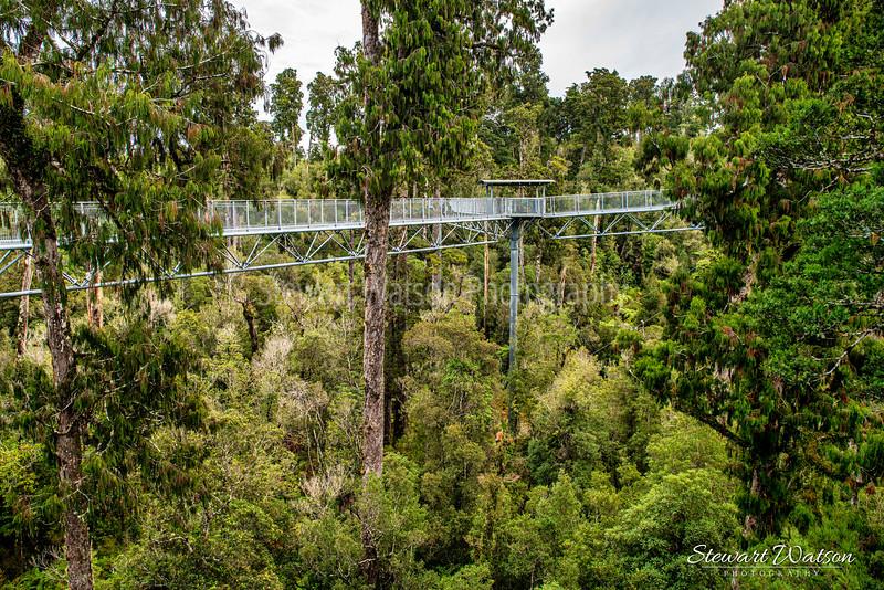 West Coast Tree Walk platform Hokitika