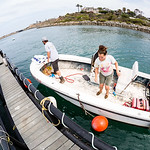 Stress evaluation in white seabass