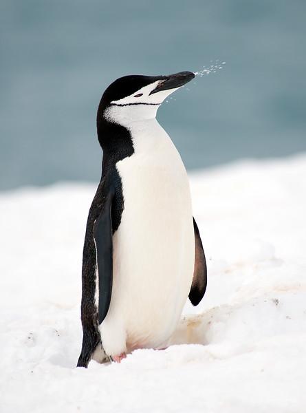 091204_penguin_island_8109.jpg