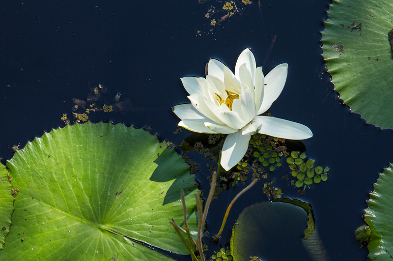 naples_botanical_garden_0032-LR.jpg