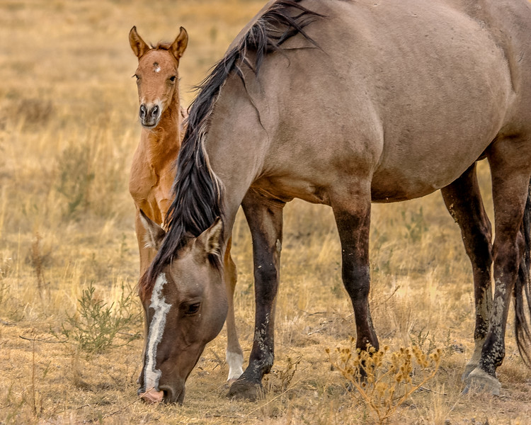 Wild Horse Mare and Foal BHWS #2