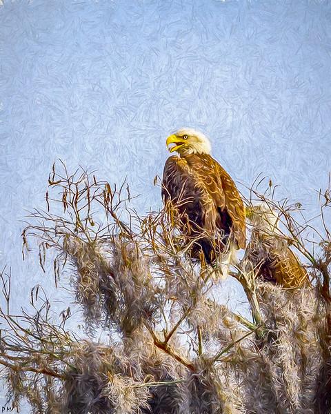 eagle3_DSC9398-copy.jpg