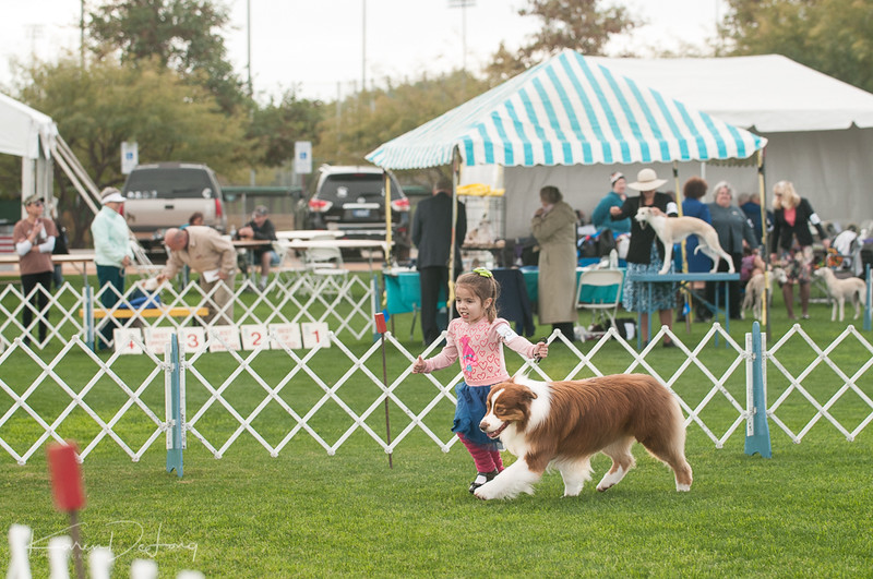 20170114_Kachina Kennel Club_Aussies-5.jpg