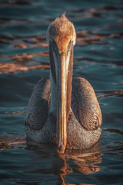 pelicanapplicationedit_Animal_0105_19.jpg