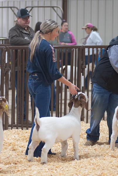 kay_county_showdown_goats_20191207-153.jpg
