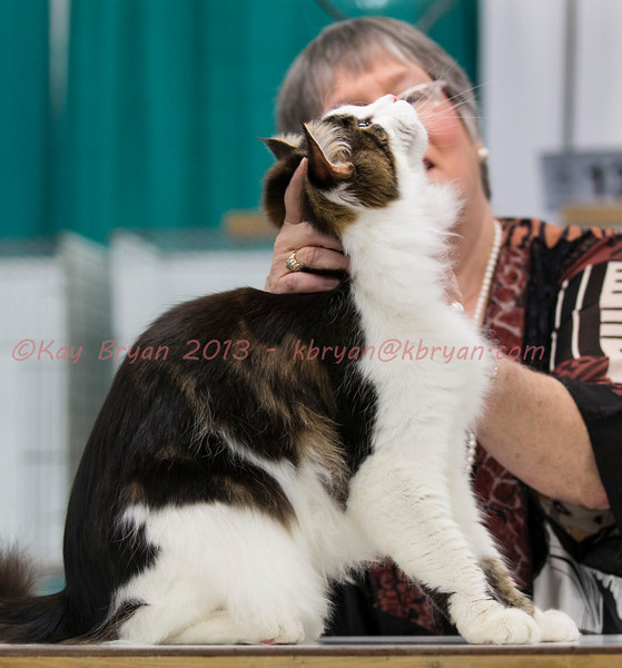 CatShow2014022_1.jpg
