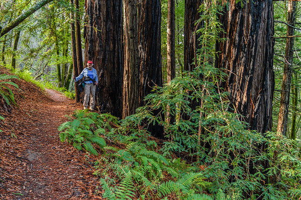 Roy's Redwoods - November, 2017
