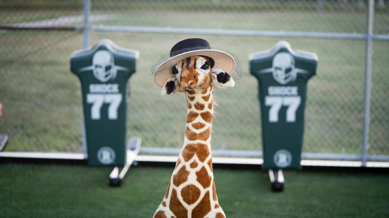 Giraffe-3110.jpg