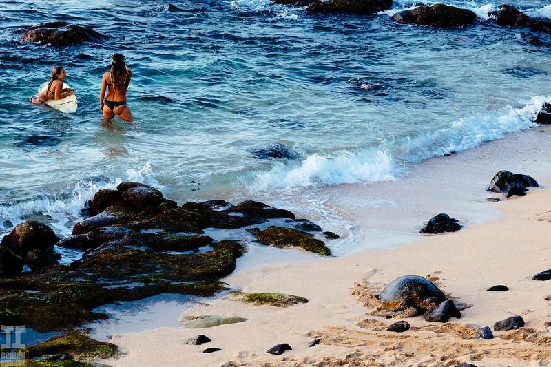 Maui Hawaii-31.jpg
