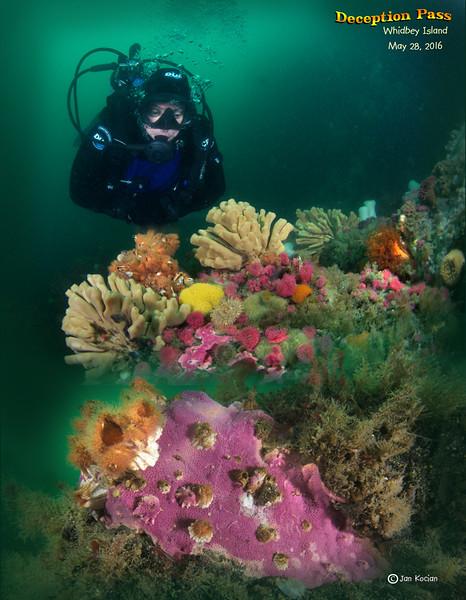 5.28.16 Marine life Pass S .jpg