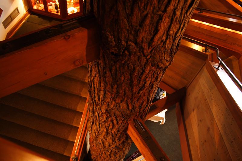 tree trunk lodge IMG_1501.jpg