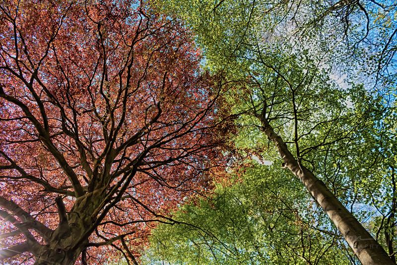 treetops-3-772.jpg