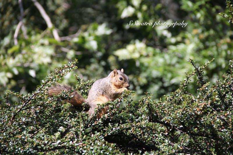 squiral La Arubium00008.jpg