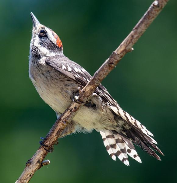Bird-6.jpg