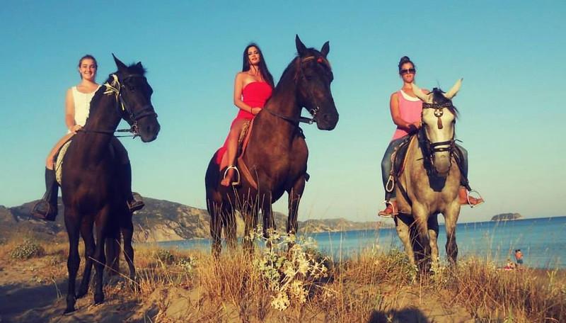 horses zantos.jpeg