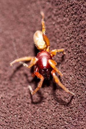 Biting spider