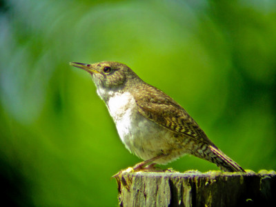 World Series of Birding 2010