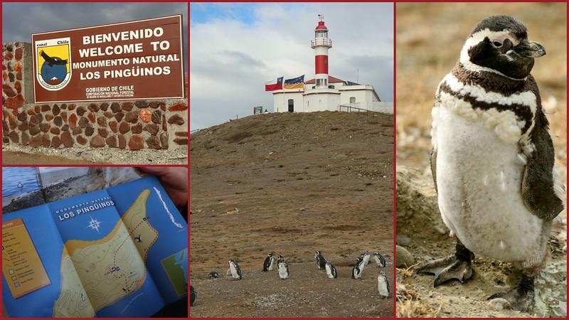 Monumento Natural Los Pinguinos (Penguins)