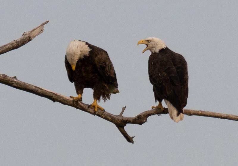08-07-2020-eagles-6.jpg