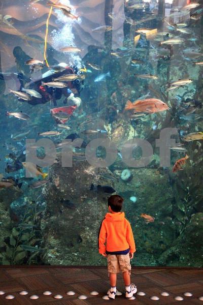 Seattle Aquarium 9098.jpg