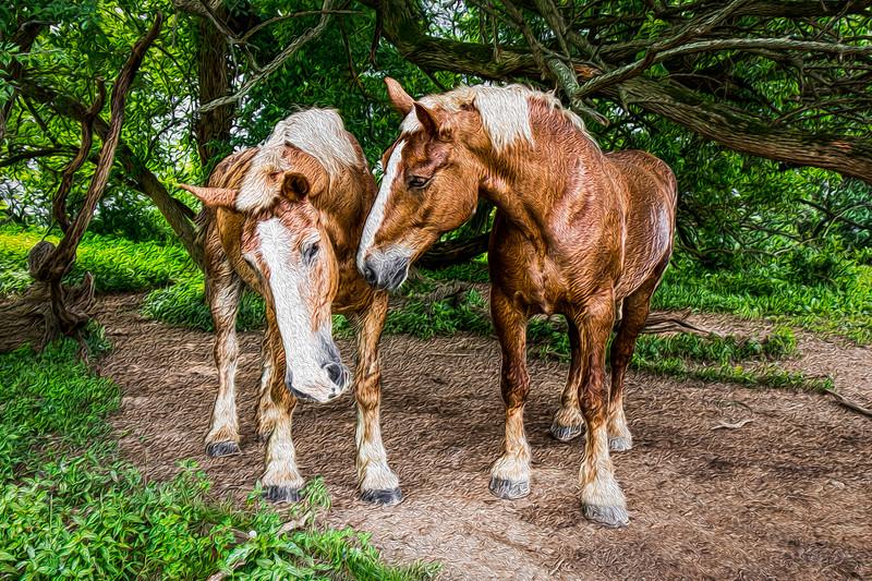 horses 2-2.jpg
