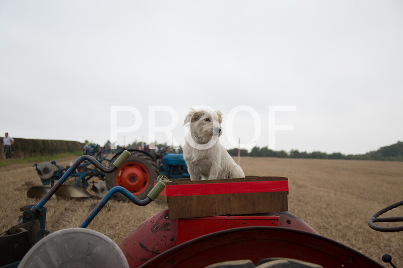 2014 Uttoxeter Ploughing Match