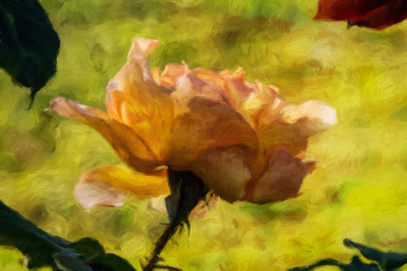 October 2 - Bustling rose.jpg