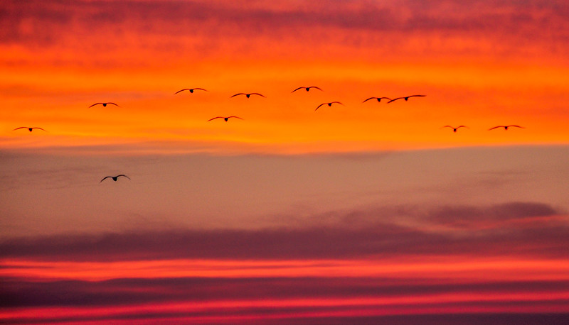 Birds-fly-home-sunset-university-lake-hampi-1.jpg