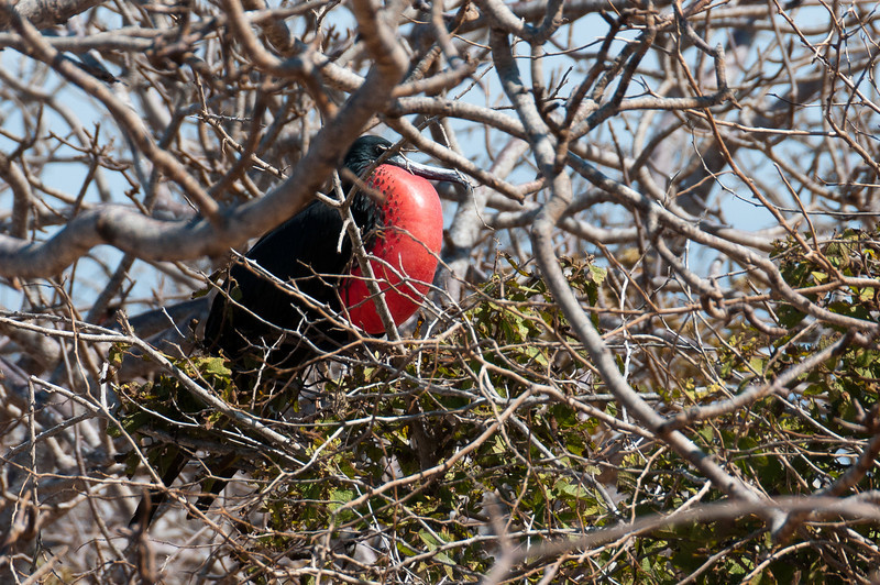 Bird on a tree in the Galapagos Islands