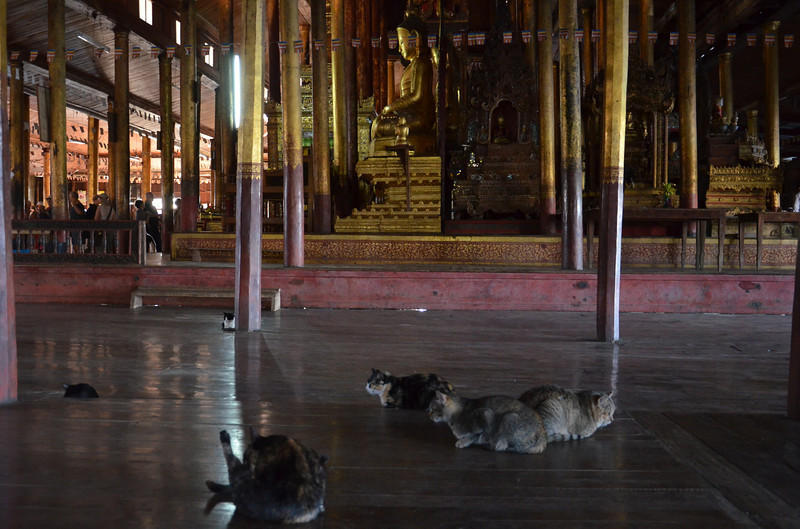 DSC_4433-cats-at-the-jumping-cat-monastery.JPG