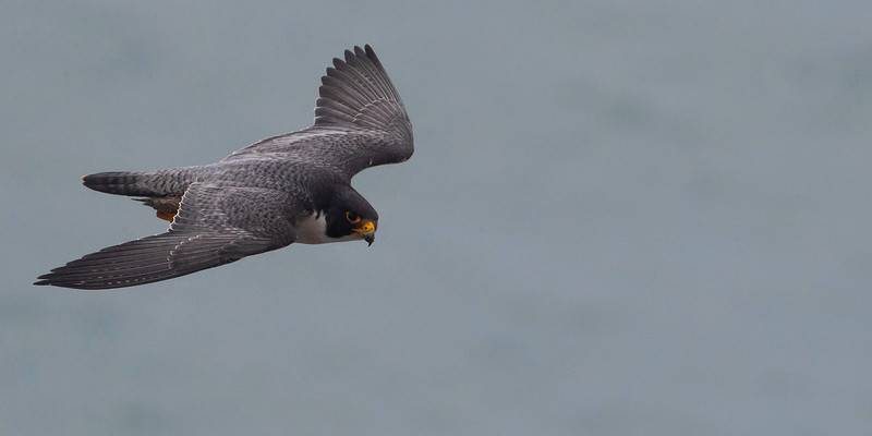 HNBH Birds1-19.jpg