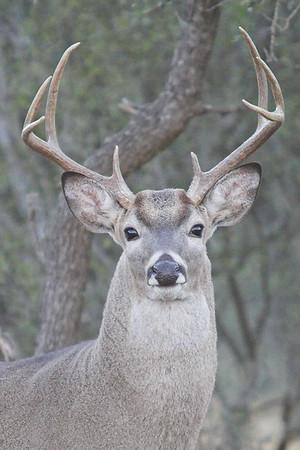 Whitetail Season 2006 - Rocksprings, Texas