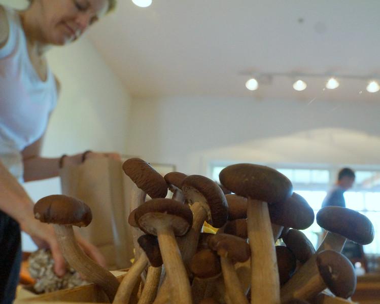 Shibumi mushrooms.jpg