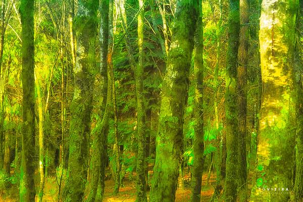 Tree / Arvores