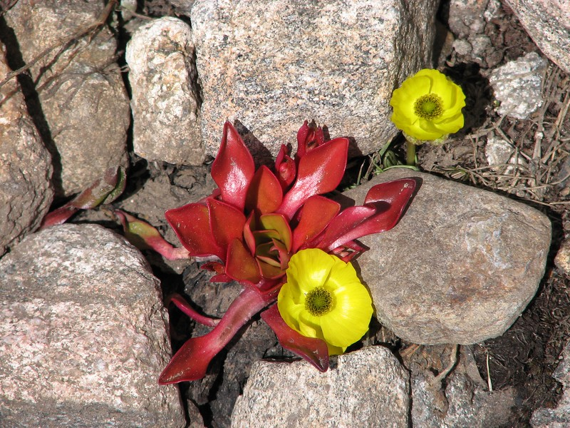amh FLOWERS (1460).jpg