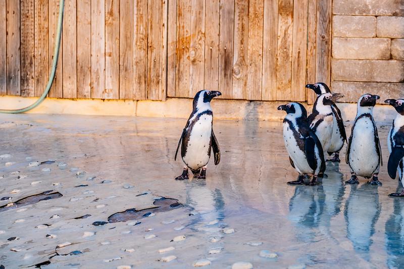 Tonis Zoo-0464.jpg