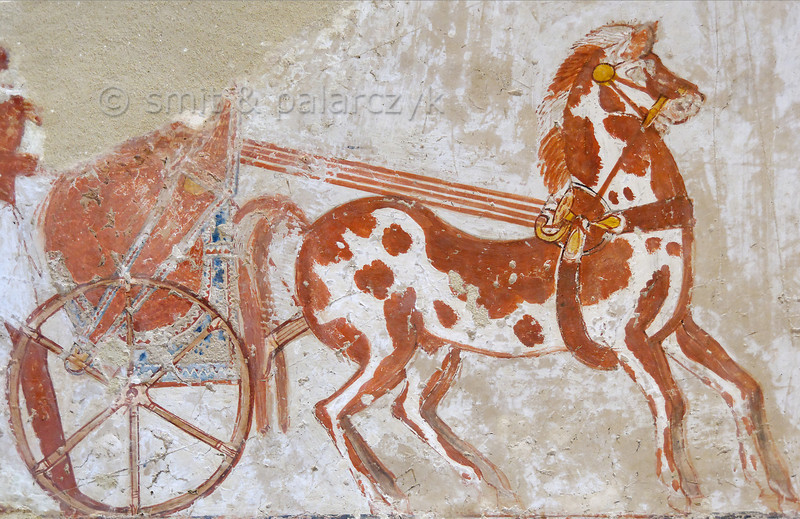 """[EGYPT 29328] 'Chariot in Menna's tomb at Luxor.'  Menna's chariot is depicted on one of the walls of his tomb. Menna was an 18th dynasty inspector of estates and overseer of harvests. His tomb (TT 69) is located in the Sheikh Abd el Qurnah Necropolis on the Westbank at Luxor. It is one of the socalled """"Tombs of the Nobles"""" and dates to the end of the reign of Thutmosis IV and the beginning of the reign of Amenhotep III. Photo Mick Palarczyk and Paul Smit."""