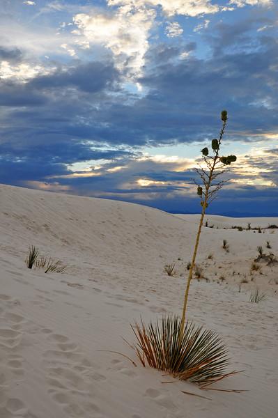 White Sands Monument at dusk.