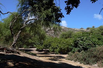 Koko Head Botanical Garden