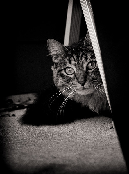 Clem kitty 2-.jpg